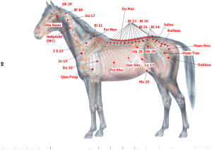 Acupuncture points - image Dr Christian Torp