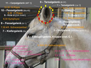 Identification of blockages - image Dr Christian Torp